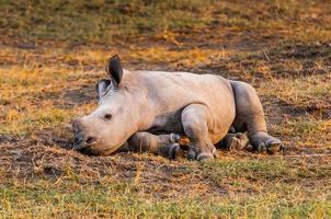 Animals in Kenya