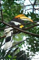 Hornbill16