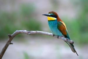 Exotic tropical bird photo