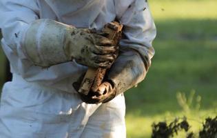 apicultor quitando el nido de abejas foto