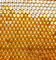 honey cells and bees photo