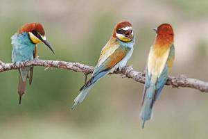 Family quarrel photo