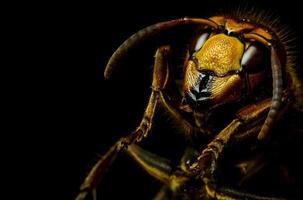 Hornet head photo