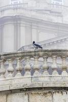 Crow on boundary