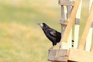 black rook on wood structure