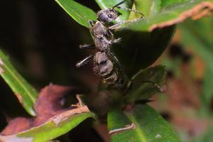 pequeños insectos foto