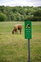 Cow danger photo