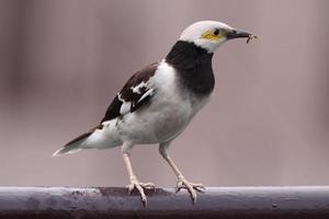 pájaro foto