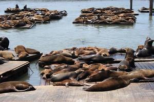focas descansando foto