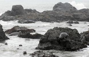 focas de puerto foto