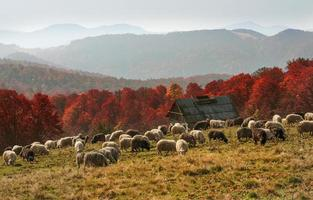 Transcarpathian pastures in autumn photo