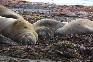 Robben und Seehunde in der Antarktis photo