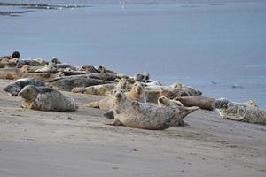 Gray Seal Group