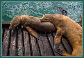 Seals photo