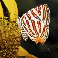 Tiny Butterfly photo