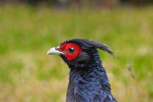 Hawaii Bird photo