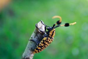 escarabajos en las ramas