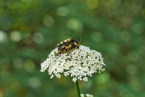 Beetles  occupied procreation.