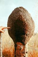 Termite colony photo