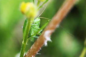 grasshopper photo