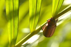 Beetle on the palm photo