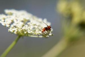 Beetle and beetle, an insect. photo