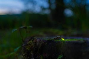 Glowworm photo
