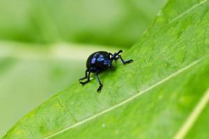 insecto tres foto