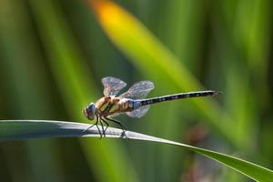 dragonfly in the garden