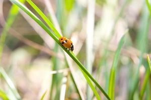 Ladybird in wood
