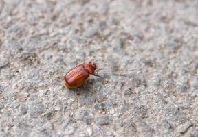 Bug photo