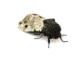 moth . photo