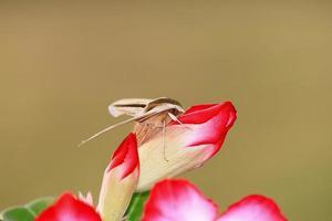 Moth on flower. photo