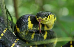Snake attack photo