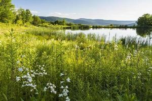flores silvestres del estanque de serpientes foto