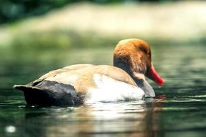 Duck tours photo