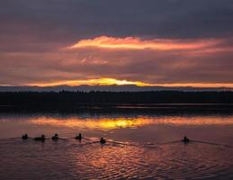 Ducks on sunset photo