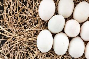 Duck's eggs on straw photo