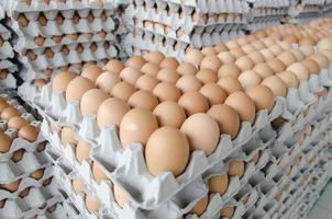 huevos en el paquete de papel gris foto