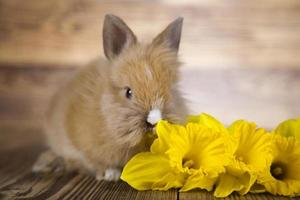 Easter bunny in flowers