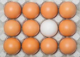 Duck egg among chicken eggs