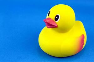 Yellow rubber duck on blue background. photo