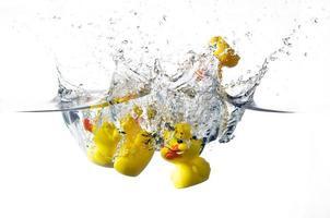 ducks splash photo