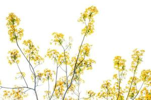 Flam-boyant flower background