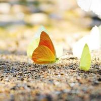 yellow butterfly on the ground photo