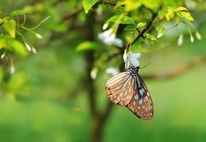 Mariposa colorida descansando sobre una flor foto