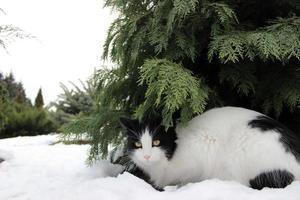 cat in snow photo
