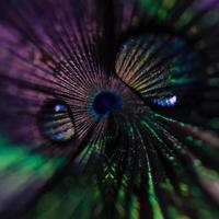 zoom pluma de pavo real con gotas foto