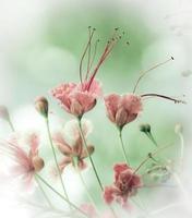 flores de pavo real