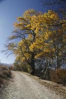 pavo viajar otoño